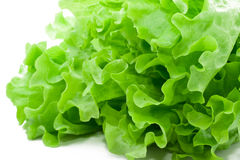 Lettuce Stock Photos