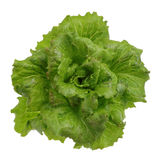 Lettuce Stock Photo