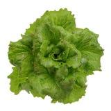 Lettuce. Appetizing vegetable spring on white backround Stock Photo