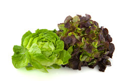 Lettuce assortment. Crisphead and red oak leaves Stock Photos