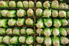 Lettuce background Stock Images