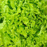 Lettuce background Royalty Free Stock Photos