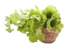 Lettuce in the basket Royalty Free Stock Photography