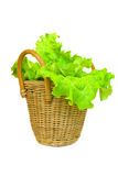 Lettuce in a basket isolated on a white. Background Stock Photo