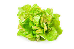 Lettuce beam Royalty Free Stock Images