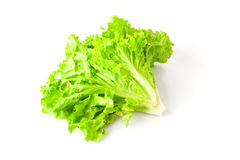 Lettuce beam Stock Photo