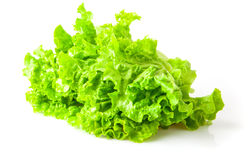 Lettuce beam Royalty Free Stock Photography