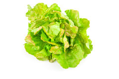 Lettuce beam Royalty Free Stock Image