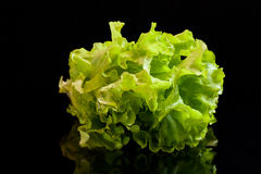 Lettuce on a black background Royalty Free Stock Images