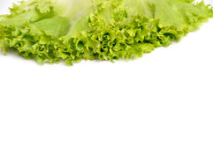 Lettuce bunch Stock Images