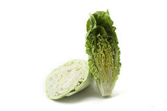 Lettuce and cabbage pointed Royalty Free Stock Images