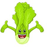 Lettuce cartoon Stock Photos