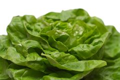 Lettuce (Close View). Close view on green and fresh lettuce Stock Image