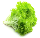 Lettuce closeup Stock Photography