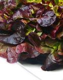 Lettuce closeup Royalty Free Stock Photography