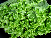 Lettuce closeup. Closeup on bright green fresh lettuce Royalty Free Stock Image