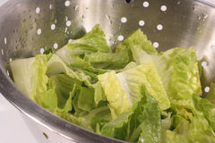 Lettuce colander Royalty Free Stock Photography