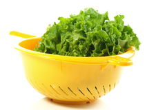 Lettuce in colander,  Royalty Free Stock Image