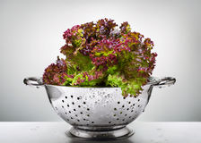 Lettuce in a colander Royalty Free Stock Image