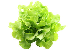 Lettuce ( cut image). Lettuce on a white background Royalty Free Stock Photography