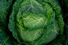 Lettuce Stock Images