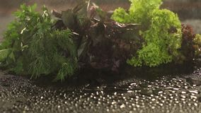 Lettuce, dill, basil with splash of water on black. stock video footage
