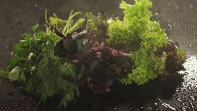 Lettuce, dill, parsley, Basil with splash of water stock video footage