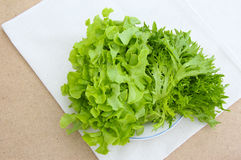 Lettuce in Disc Royalty Free Stock Images