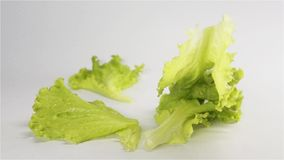 Lettuce fall on surface multiple times stock video