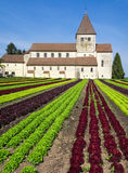 Lettuce field and monastery. Rows of different sorts of lettuce. Scenic farming with a beautiful monastery in the background. Organic production of vegetables Stock Photography