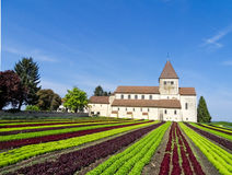 Lettuce field and monastery. Rows of different sorts of lettuce. Scenic farming with a beautiful monastery in the background. Organic production of vegetables Royalty Free Stock Photo