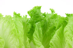 Lettuce foliage isolated Royalty Free Stock Photo