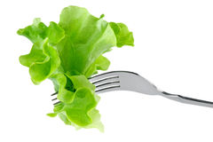 Lettuce on fork Stock Image
