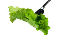 Lettuce on a fork Stock Photo