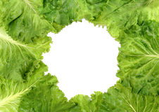 Lettuce frame Stock Photo