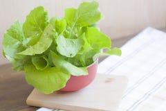 Lettuce. Fresh green lettuce, healthy eating stock photography