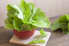 Lettuce. Fresh green lettuce, healthy eating stock image