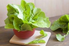 Lettuce. Fresh green lettuce, healthy eating stock photos