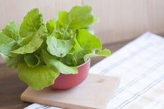 Lettuce. Fresh green lettuce, healthy eating stock photo