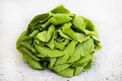 Lettuce. Fresh and healthy green lettuce on White background Royalty Free Stock Image