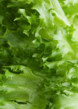 Lettuce frillis  texture Royalty Free Stock Image
