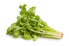 Lettuce Frisee Royalty Free Stock Images