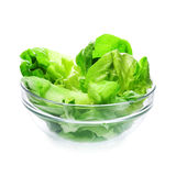Lettuce in glass bowl Stock Image