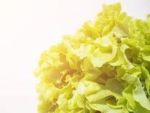 Lettuce Stock Image