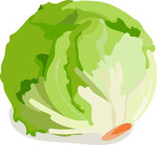 Lettuce Head Stock Image