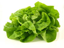 Lettuce head, isolated. Head of fresh lettuce on isolated background royalty free stock photos