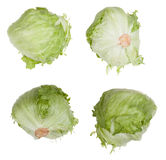 Lettuce head Stock Photo