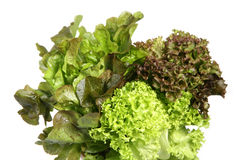 Free Lettuce Heads Royalty Free Stock Image - 1758106