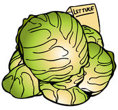 Lettuce Heads Royalty Free Stock Photography