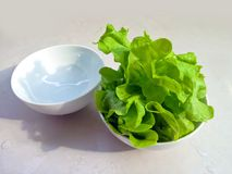 Lettuce for healthy, green vegetable Stock Photo